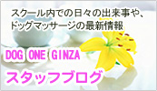 DOG ONE GINZA スタッフブログ